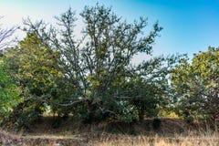 看起来一个小榕树关闭的视图令人敬畏在一个池塘附近在农村森林里 库存照片