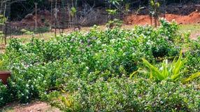 看起来印地安庭院的花床令人敬畏在一个国家公园 免版税图库摄影