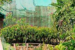 看起来印地安庭院的花床令人敬畏在一个国家公园 免版税库存照片