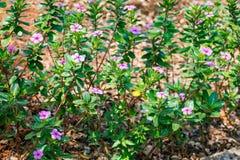 看起来印地安庭院的花床令人敬畏在一个国家公园 库存图片