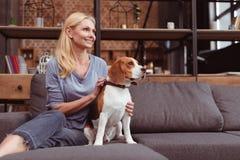 看起来可爱的白肤金发的妇女去,当坐与小猎犬狗时 库存照片