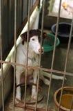 看起来哀伤的风雨棚的狗 免版税库存图片