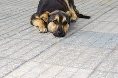 看起来孤独的狗哀伤 免版税库存图片