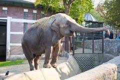 看起来平直的动物园的照相机大象 库存图片