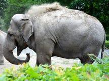 看起来平直的动物园的照相机大象 图库摄影