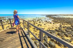 看起来澳大利亚Stromatolites的妇女 免版税库存图片