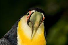 看起来的照相机toucan 库存图片