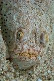 看起来的鱼丑恶 免版税库存照片