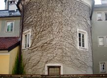 看起来象与眼睛和嘴的一张inspirited面孔常春藤分支包括的一个古老大厦的一个奇妙看法 免版税库存照片