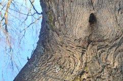 看起来象女孩的树 库存照片