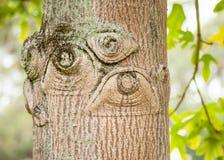 看起来象肉眼在老树的结 库存照片