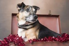 看起来逗人喜爱的小狗的狗坐在闪亮金属片中 免版税库存图片