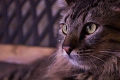 看边的猫 免版税库存图片