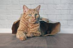 看逗人喜爱的姜的猫在一个纸袋和斜向一边 免版税图库摄影