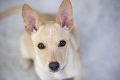 看逗人喜爱的小狗好奇地 库存图片
