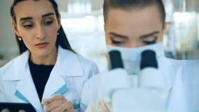 看通过一个显微镜的女性科学家在实验室 股票视频