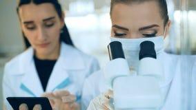 看通过一个显微镜的女性科学家在实验室 影视素材