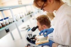 看通过显微镜的年轻科学家在实验室 免版税库存照片