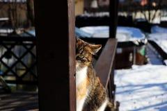 看通过木粱的猫 库存照片