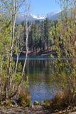 看通过树JENKS湖、森林和雪加盖的山 库存照片