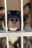 看通过风雨棚笼子的哀伤的小狗指向鼻子,不快乐的em 库存图片