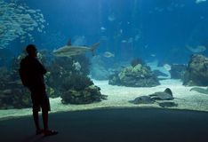 看里斯本水族馆的人 免版税库存照片