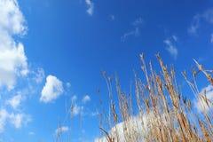看野草和天空蔚蓝与一些朵云彩 图库摄影
