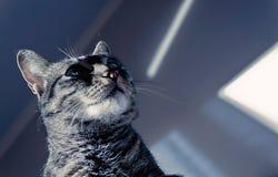 看阴影的猫 免版税库存照片