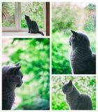 看雨窗口外的猫 免版税图库摄影