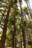 看高大的树木机盖 图库摄影