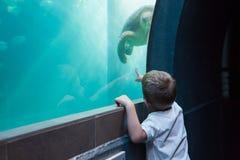 看鱼缸的小男孩 免版税库存图片