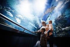 看鱼缸的愉快的家庭水族馆 库存照片