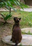 看鸟的布朗猫 免版税库存图片