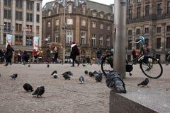 看水坝的鸽子在阿姆斯特丹 免版税图库摄影