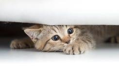 看从小孔下面的滑稽的猫被隔绝 免版税库存图片