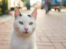 看直接地对照相机的街道猫 免版税库存图片