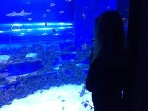 看水族馆的妇女 免版税库存照片