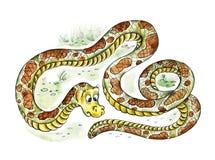 看他的尾巴的逗人喜爱的蟒蛇 皇族释放例证