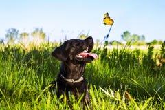 看蝴蝶的沮丧 免版税库存照片