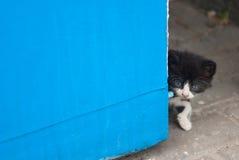 看从角落的美丽的小猫 免版税库存照片