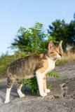 看horizont的好奇猫 免版税库存照片