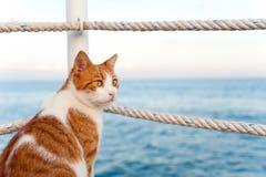 看torward的逗人喜爱的红色猫海坐码头 免版税图库摄影