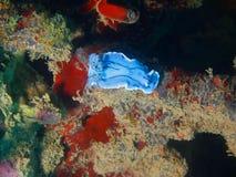 真实的海参 库存图片