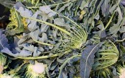 真正原始的绿色硬花甘蓝北意大利在g的待售 库存照片