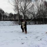 真正地美丽的伯尔尼的山狗 库存照片