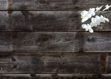 真正木背景最小的舱内甲板位置与白色兰花的 图库摄影