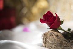 真正的在漂泊木头的红色玫瑰唯一浪漫婚礼华伦泰白色丝绸 免版税库存图片