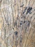 真正的木纹理 免版税库存图片