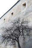 真正的树有墙壁背景 免版税库存图片