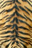 真正的老虎皮肤纹理  库存照片